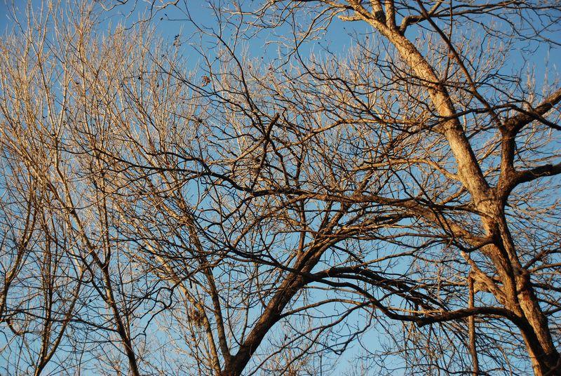 2_11_sunset_on_trees